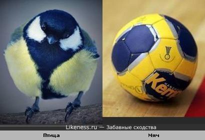 Птица похожа на мячик