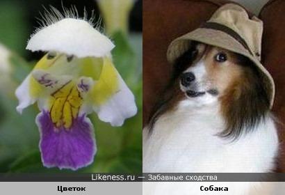 В этом цветке увидела собачью мордочку