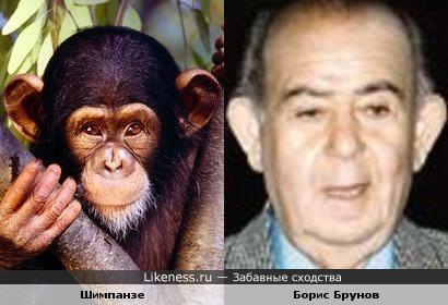 Шимпанзе и Борис Брунов