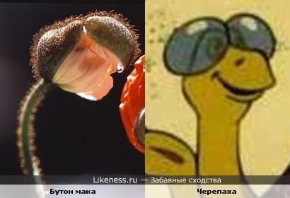 Бутон мака и Черепаха из мультфильма
