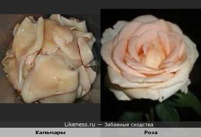 Роза из кальмаров