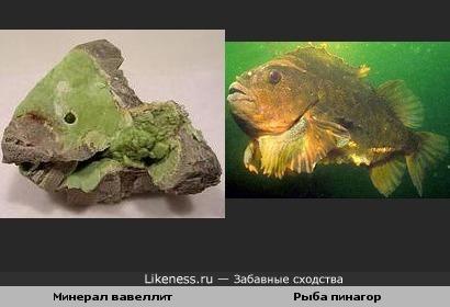 Минерал вавеллит похож на рыбу