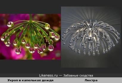 Укроп в капельках дождя похож на люстру