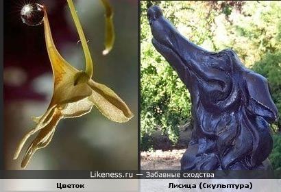 Этот цветок с капелькой дождя напоминает голову лисицы