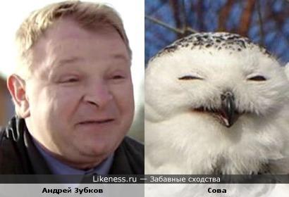 Сова напомнила актёра Андрея Зубкова