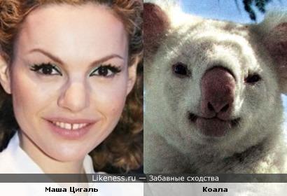 Дизайнер Маша Цигаль и коала-альбинос