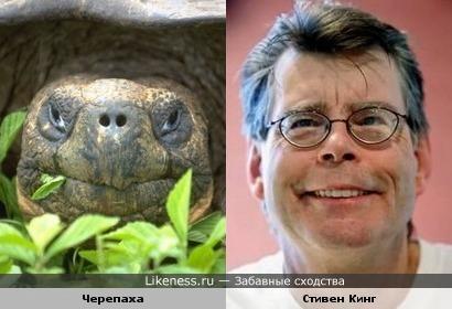 Черепаха и Стивен Кинг