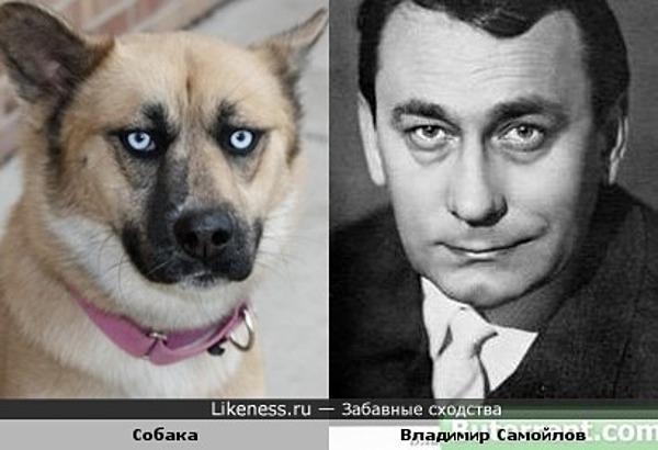 Эта собака напомнила Владимира Самойлова