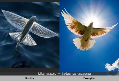 Красота полёта