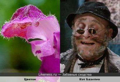 Розовый цветок, или новые приключения Кота Базилио