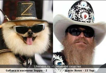 Собака в костюме Зорро напомнила Дасти Хилла