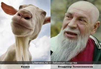 Фото козла с огромной бородой