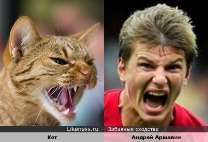 Этот кот похож на Андрея Аршавина