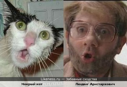 Кот Людвига Аристарховича
