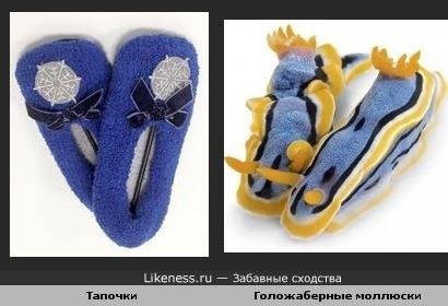 Голожаберные моллюски похожи на пару мягких тапочек