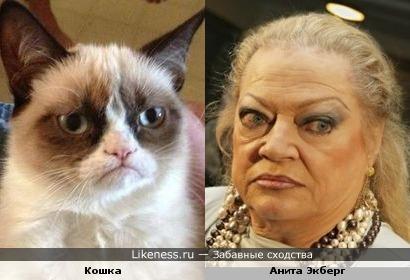 Эта кошка напомнила мне Аниту Экберг