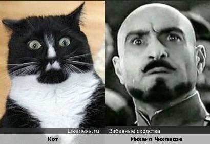 Кот и Михаил Чихладзе