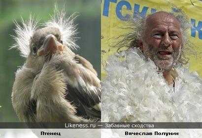 Птенец напомнил Вячеслава Полунина