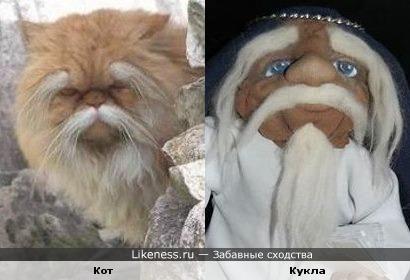 Кот и кукла похожи на шаолиньских монахов