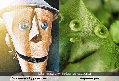 Железный дровосек увидел этот мох в Изумрудном городе