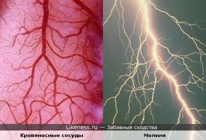 Кровеносные сосуды и молния