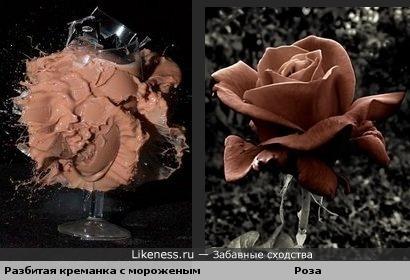 Разбитая креманка с шоколадным мороженым похожа на коричневую розу