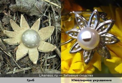 Этот гриб похож на ювелирное украшение