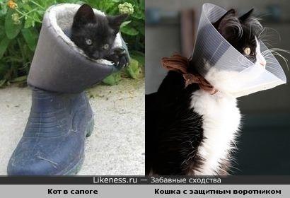Кот в сапоге и кошка с защитным воротником