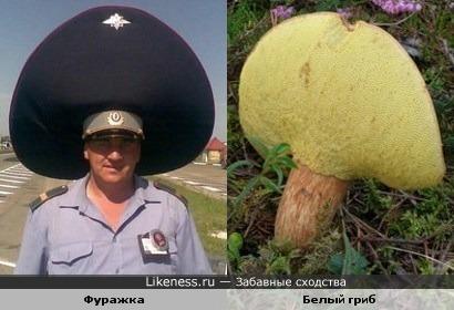 Шляпка у белого гриба похожа на фуражку