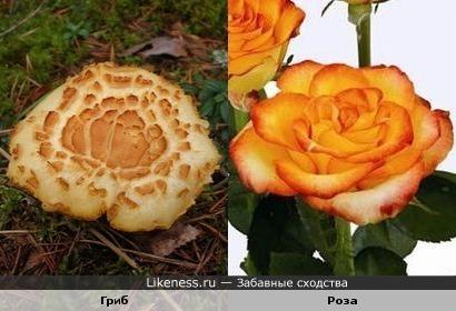 Этот гриб похож на цветок