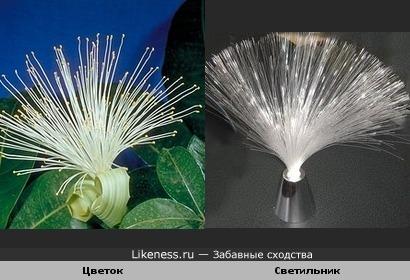 Этот цветок похож на светильник из стекловолокна