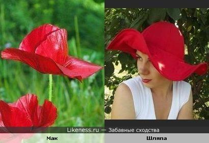 Этот мак напоминает шляпку
