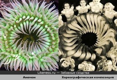 Хореографическая композиция напоминает анемон