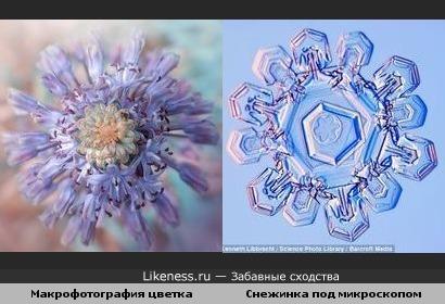 Цветок похож на снежинку