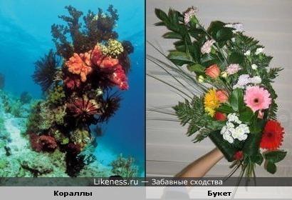 Подводная флористика