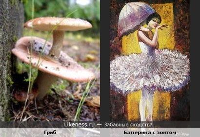 Сыроежка-балерина