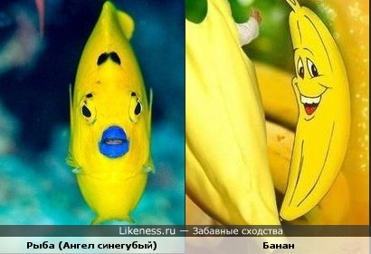 Эта рыбка напоминает банан