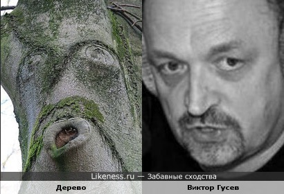Дерево и Виктор Гусев