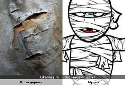 Кора на дереве напомнила мумию