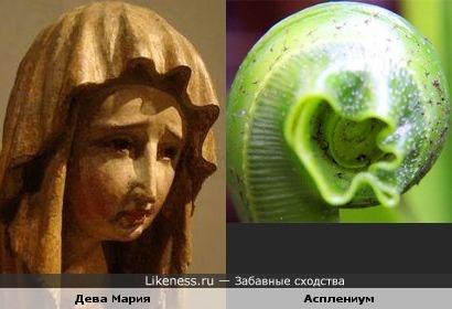 Дева Мария и асплениум