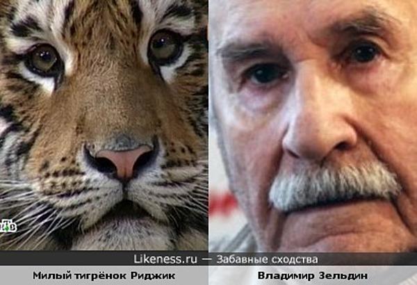Тигрёнок и Владимир Зельдин