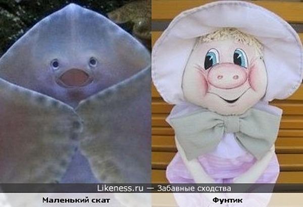 Скат Фунтик