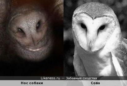 Нос собаки напоминает сову