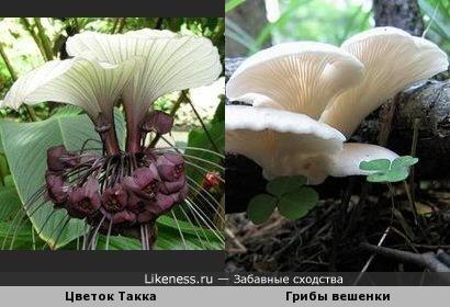 Цветочки-грибочки