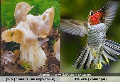 Этот гриб похож на птичку