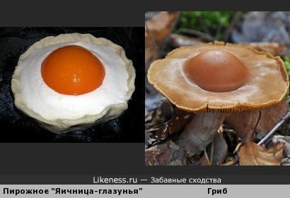 """Этот гриб похож на шоколадное пирожное """"Яичница-глазунья"""""""