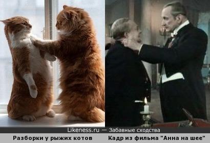 """Эти коты напомнили кадр из фильма """"Анна на шее"""""""
