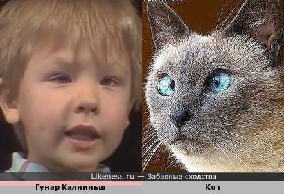 Прибалтийский «Кукушонок» и просто забавный кот