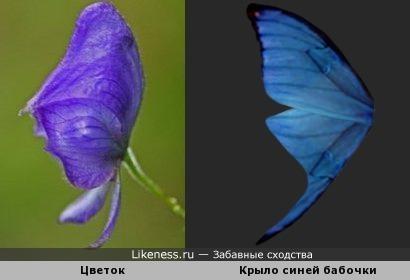 Цветок похож на крыло бабочки