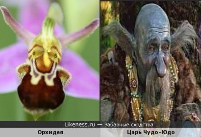 Чудо-цветок и Чудо-Юдо